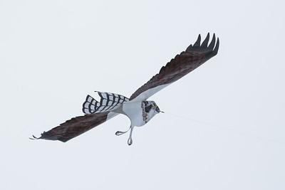 Decoy predator to scare birds in Timmins