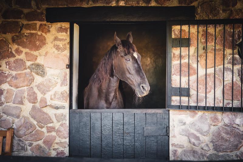 Horses & Surroundings
