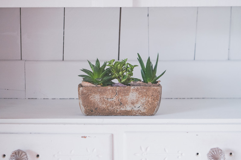 Succulents In White Cabinet-1.jpg