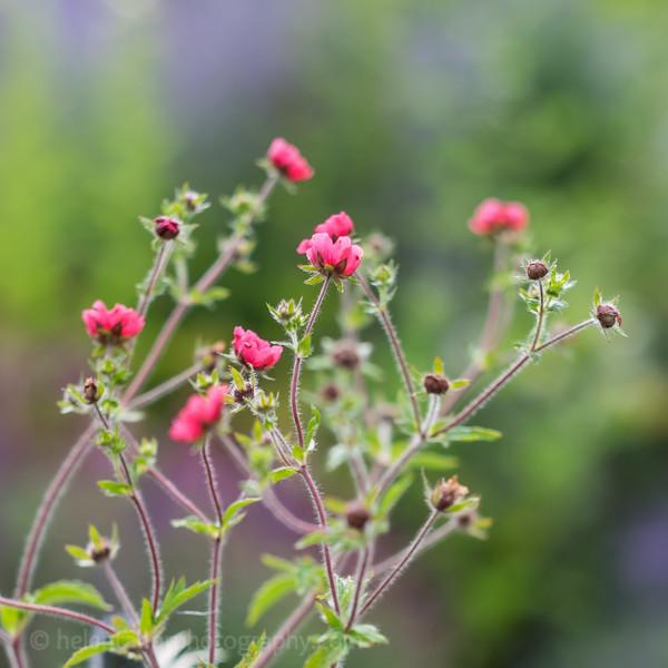 Hob Green garden-6.jpg