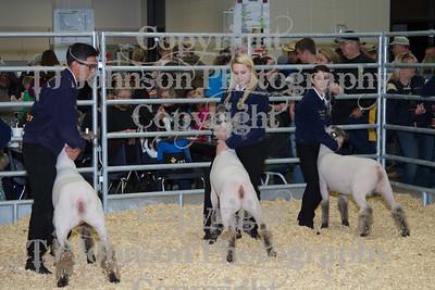 2013 Klein ISD Lamb Show Class 2