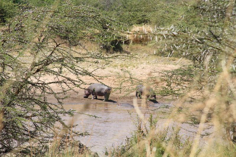 Kenya Part2 '15 665.JPG
