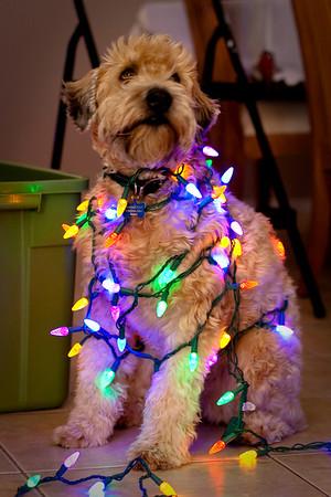 Bear With Christmas Lights