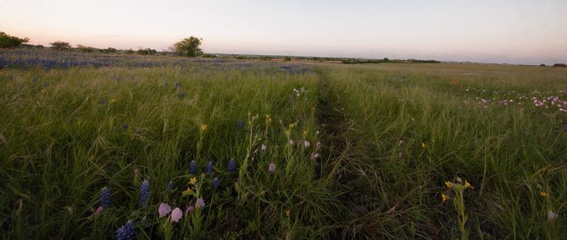 wild flower-2.jpg