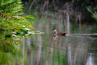 Hickey Creek Mitigation Park