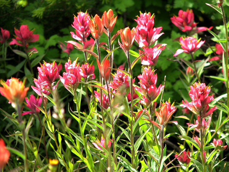amh FLOWERS (1349).jpg