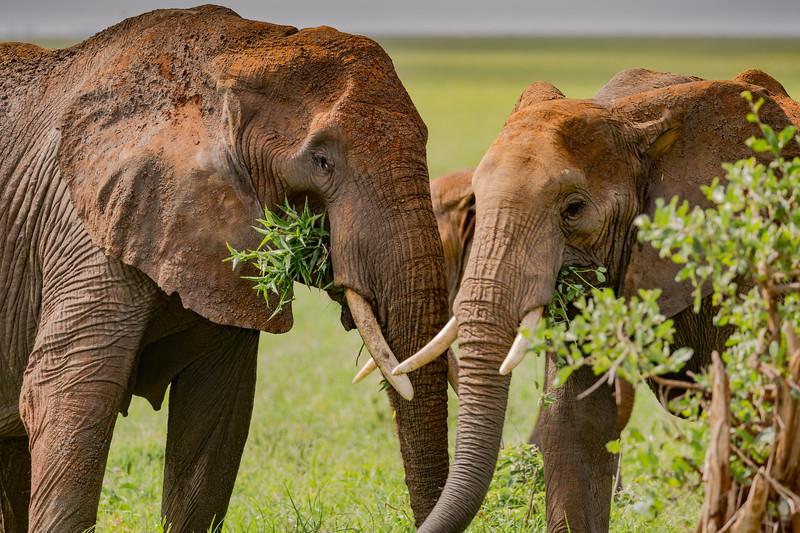 1802_Tanzania038.jpg