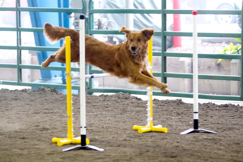 3-15-2015 Bloodhound-9830.jpg