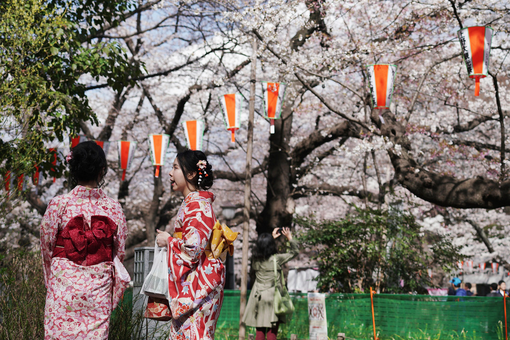 . Kimono-clad visitors view the blooming cherry blossoms in Tokyo, Friday, March 23, 2018. The cherry blossom season marks the arrival of spring for the Japanese. (AP Photo/Eugene Hoshiko)