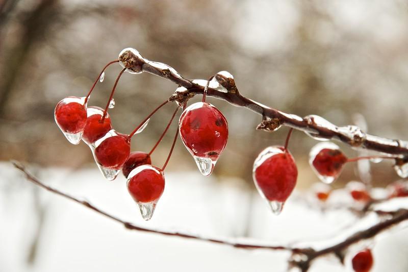 Frigid Fruit