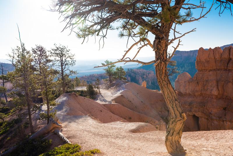 Bryce Canyon-29.jpg