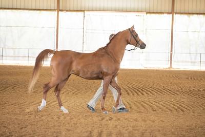 Horse 490