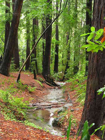 Big Sur Forest.jpg