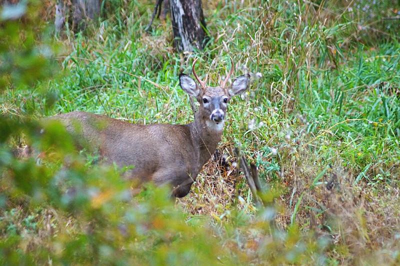 10-12-2012 Foliage 073 SM Edit.jpg