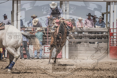 Haines Stampede July 4