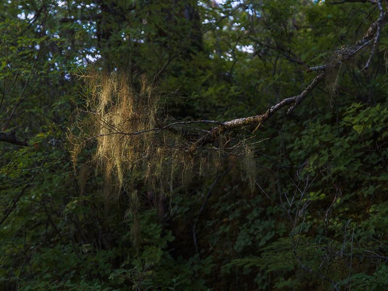 Lichen with Light