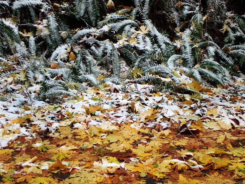 PB030082 Mt Erie winter Fall forest K.jpg