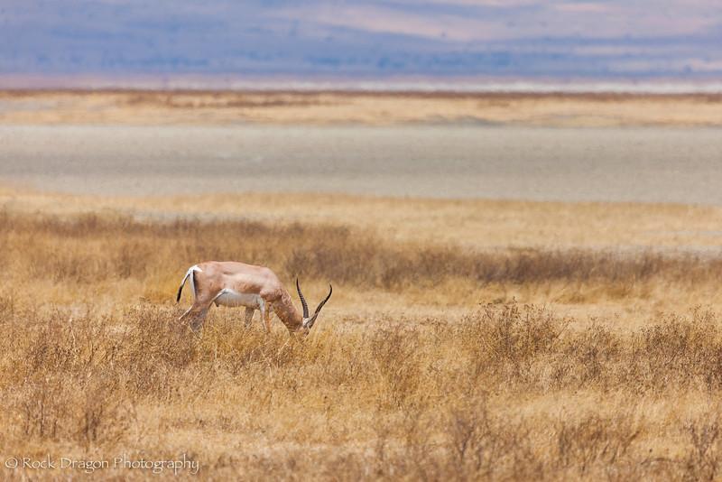 Ngorongoro-74.jpg