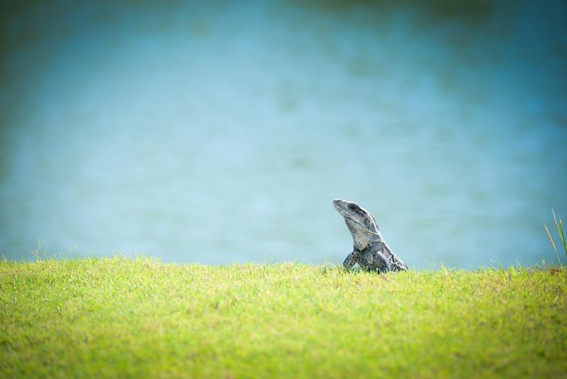 Cancun-20120914-1824--2090275739-O.jpg