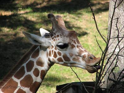 NC Zoo 100710