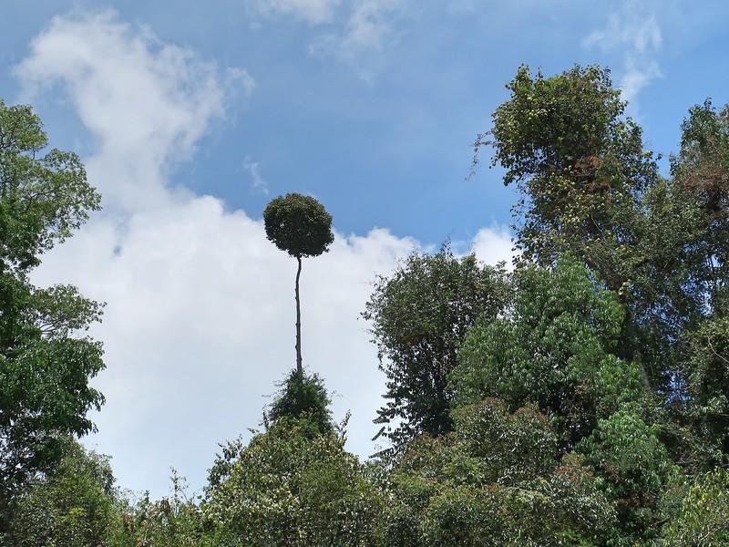 IMG_5221-emergent-tree.jpg