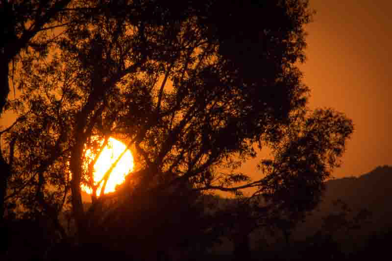 October 2 - Sunset behind the tree.jpg