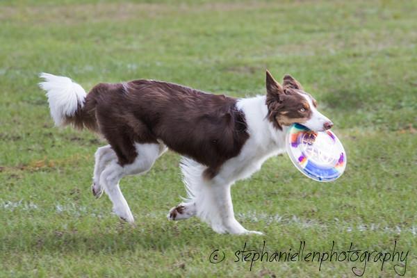 _MG_2603Up_dog_International_2016_StephaniellenPhotography.jpg
