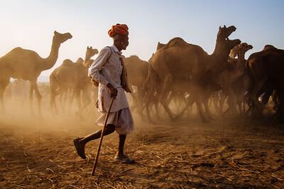 X-Pro 1 at the 2012 Pushkar Camel Fair - Rajasthan, India