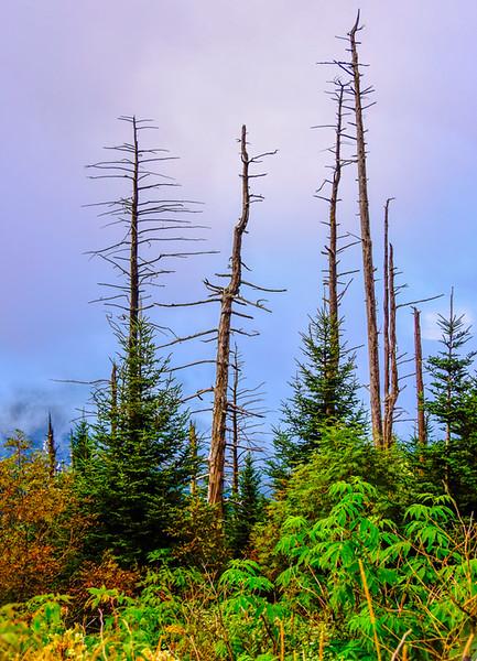 Smoky Mountains 157