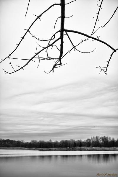 Branch Overhang