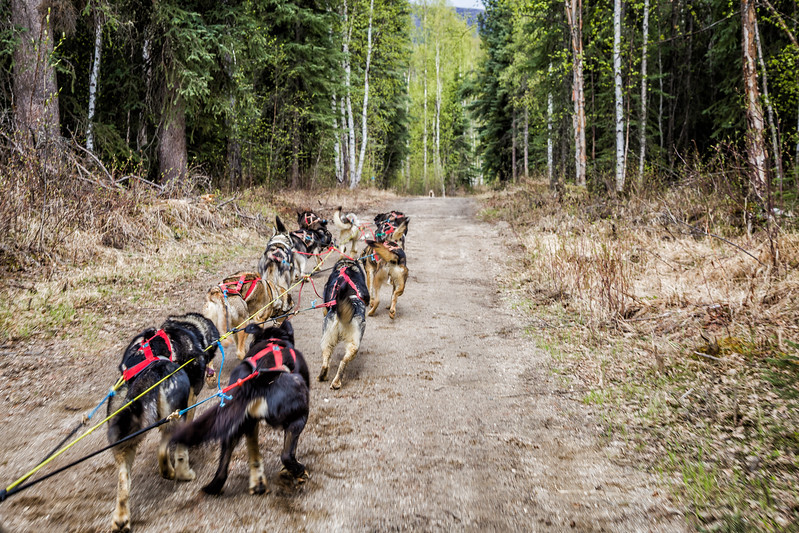 Chena Hot Springs Dog Sledding Alaska