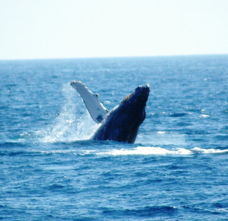 whale waves_1.JPG