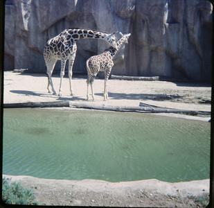 Milwaukee Zoo