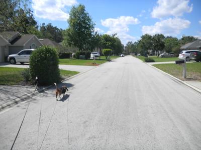 Susie and Rocky II Dog Walks