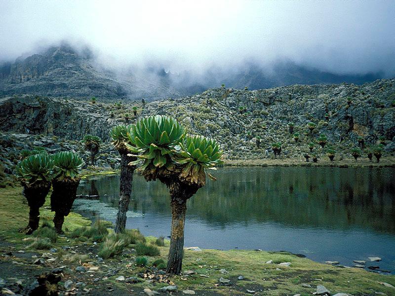 Mount Kenya - הר קניה