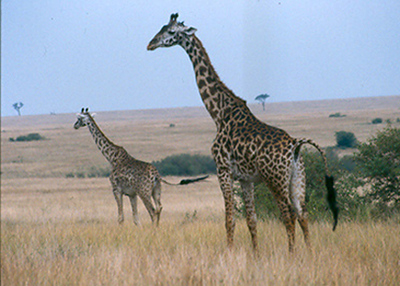 Hoofed Mammals