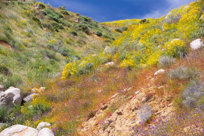 Spring Flowers B-169.jpg