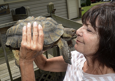 woman-reunited-with-lost-tortoise-after-twoweek-search