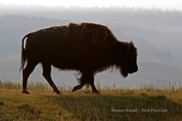 Tetons and Yellowstone 2008
