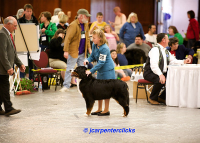 Best of Breed Competition - Girls