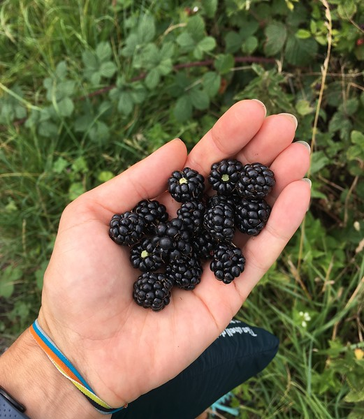 Back to the blackberry season!