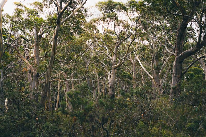 Australia-6.jpg