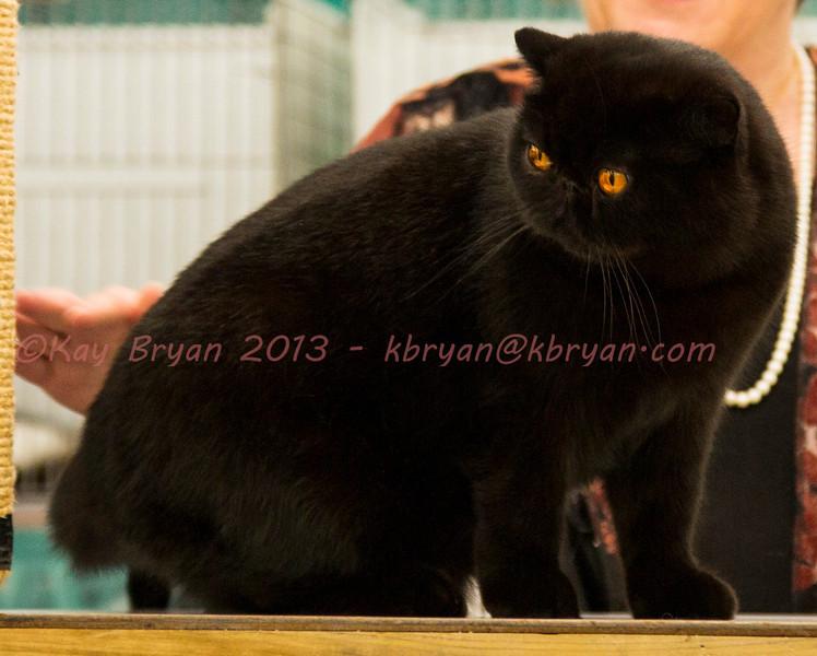CatShow2014015.JPG