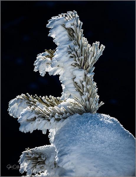 JM8_4695 Frosty Pine wide cust crop LPW.jpg