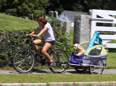 Chelmsford bicycle cart dog 080919