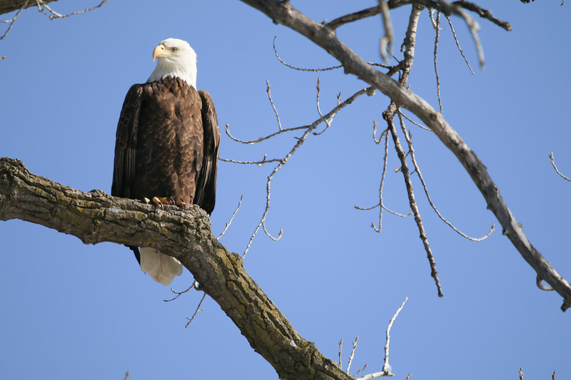 2-18-17 Eagle Final-45.jpg