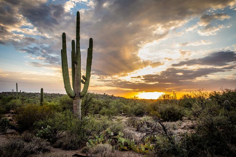 WVWS_Saguaro--2.jpg