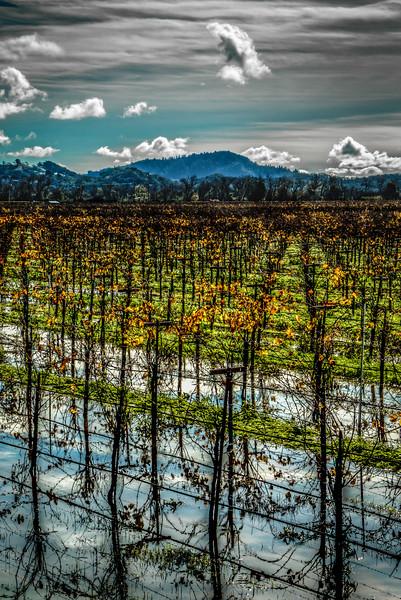 vinyardreflection1.jpg