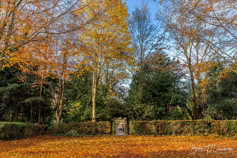 Autumn Leaves in Hassocks Remembrance Gardens