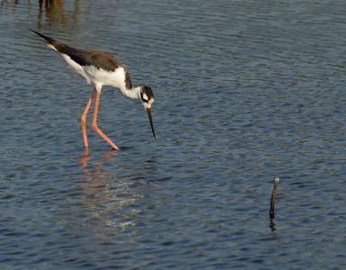 Lacassine National Wildlife Refuge